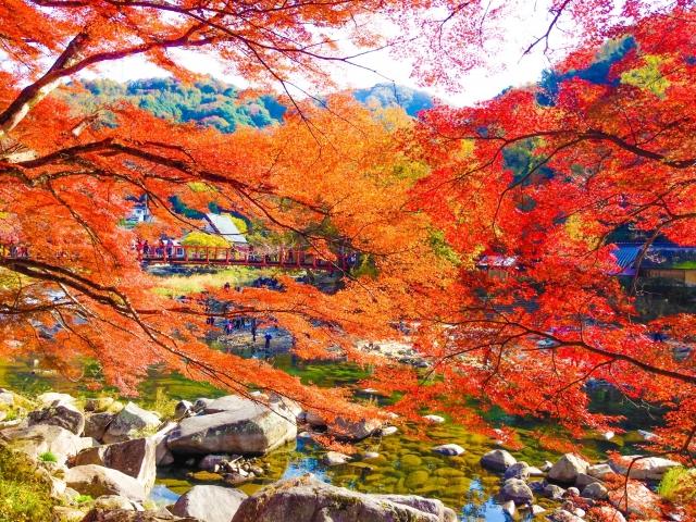 2015愛知の紅葉おすすめは香嵐渓!渋滞や駐車場の混雑を避け温泉も楽しもう♪