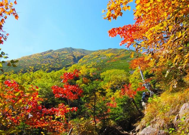 2015愛知の紅葉穴場は鳳来寺山!?ドライブに最適!登山気分も味わえる?