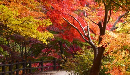 愛知県民の森は紅葉スポットの超穴場?ハイキングも温泉も楽しめる?