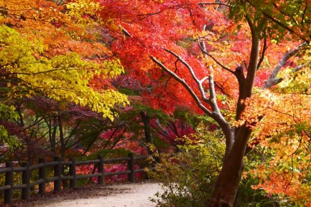 超穴場!?愛知県民の森の紅葉はのんびりハイキングや登山まで楽しめる?