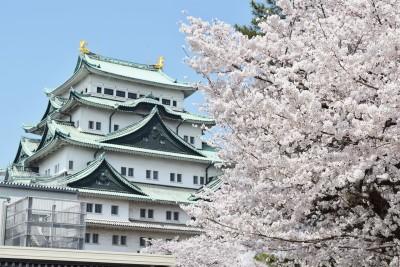 名古屋城2017桜ライトアップや見頃はいつ?見所とおもてなし武将隊とは?