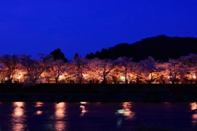 角館 桧木内川堤 ソメイヨシノ ライトアップ 夜桜
