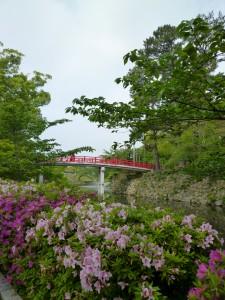 岡崎公園 神橋とツツジ