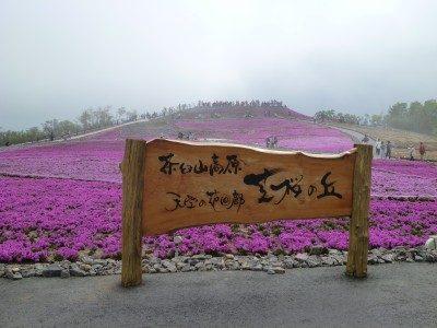 茶臼山の芝桜2016行ってみた感想!駐車場の渋滞回避するには?