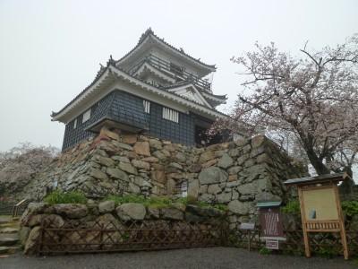 浜松城 桜