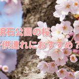 愛知の桜 明石公園は子供と1日楽しめる花見の穴場?入園駐車場無料?